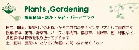 観葉植物 鉢花 草花 ガーデニング